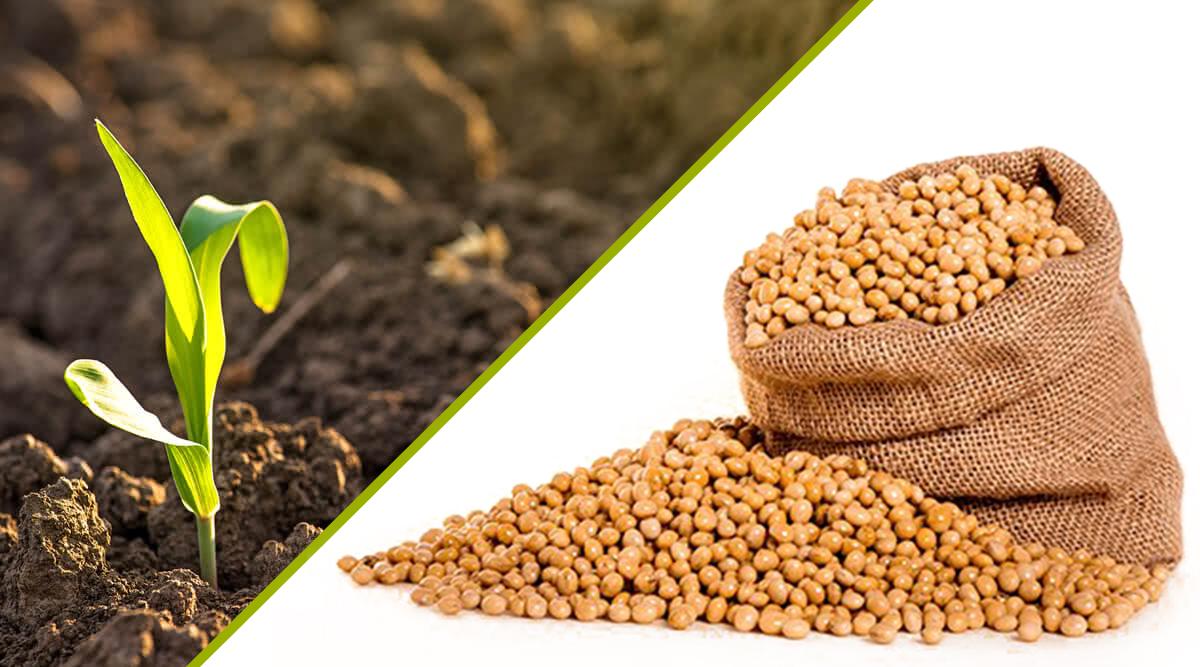 Why Should You Choose Badimandi to Purchase Seeds In Bulk Quantity? – Badimandi