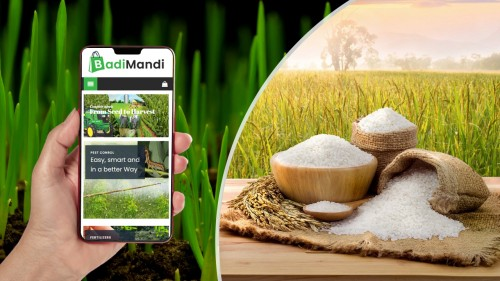 Why Should You Choose Badimandi To Purchase Seeds In Bulk Quantity? - Agrocentre - Special Agro Forum